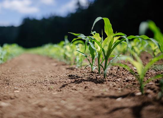 AL-KO Plenrulle fordeler | Komprimere bakke og trykke ned frøene